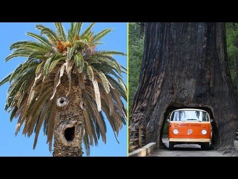 20 Trees You Won't Believe Actually Exist
