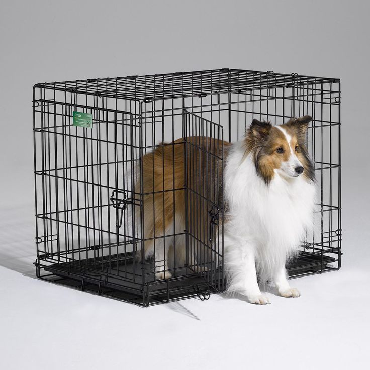 Dogs Bernese Mountain Ideas Dog Cages Dog Crate Cat Cages