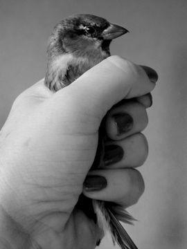 Fiona Pardington NZ Maori Bird in Fist, 2003