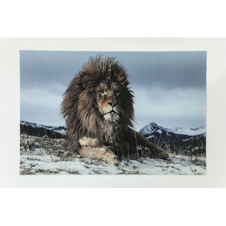 Πίνακας Glass Proud Lion 120x180 Μία πραγματικά εντυπωσιακή εικόνα ενός περήφανου λιονταριού ψηφιακή εκτύπωση πάνω σε γυαλί θα φέρει την άγρια φύση στο χώρο σας.