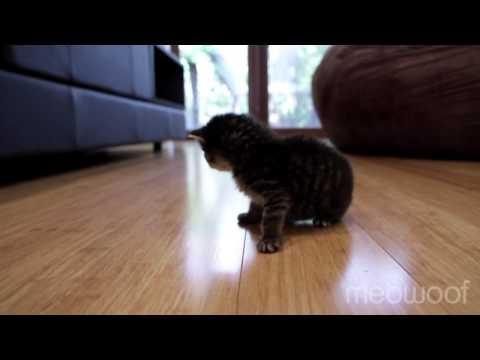 birdie's first steps