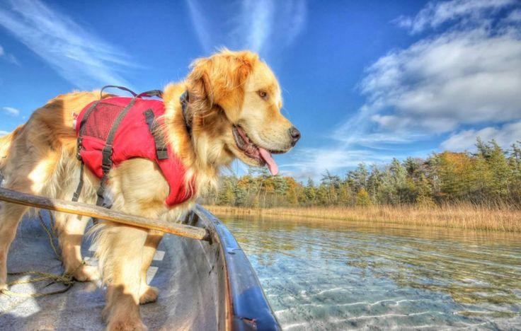 Où voyager avec son chien en Ontario