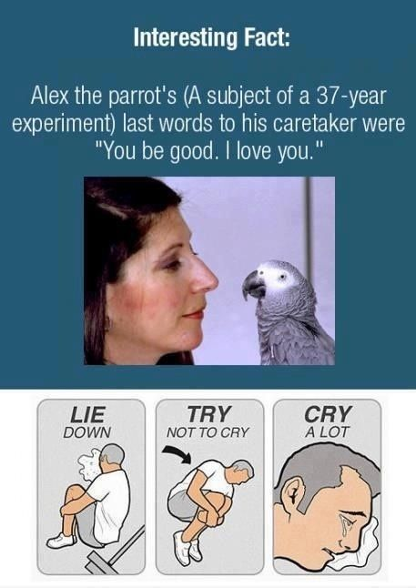 Alex the parrot - a truly amazing animal.