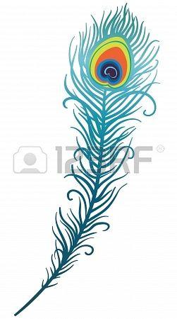 illustration de la belle plume de paon sur un fond blanc (vecteur) Banque d'images - 20393979