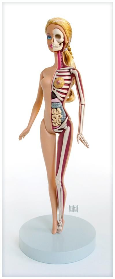 Barbie´s anatomy, by Jason Freeny