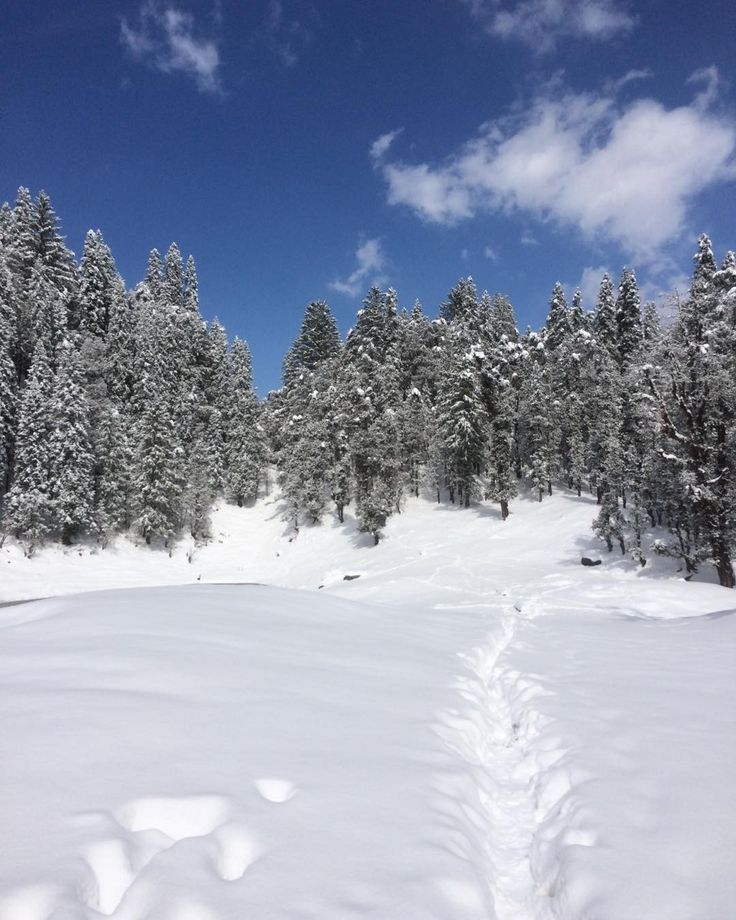 Please come love I am falling in the snow you said is safe... Hold me now I am six feet under ground and I am thinking may be six feet ain't over now  #instapic #igindia #instadaily #travelgram #travel #photography #trekking #nature #camping