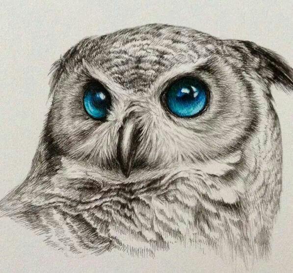 blue eyed owl drawing cute art owl art drawings owl