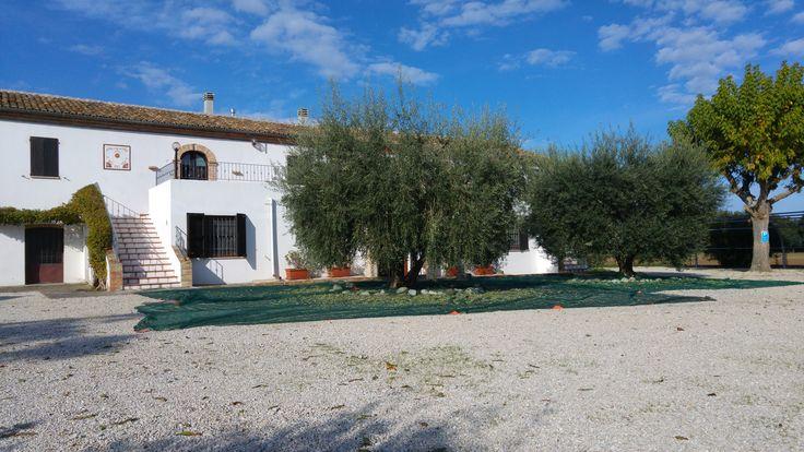 Raccolta delle olive 2015! Grandiosa raccolta alla Meridiana! Gli ulivi che ho piantato da ragazzino, adesso mi stanno regalando grandissime soddisfazioni! Un saluto dall'Abruzzo a tutti gli amici, Francesco  Tel: +39 338 3641307 Web: www.agriturismolameridiana.it Mail: info@agriturismolameridiana.it