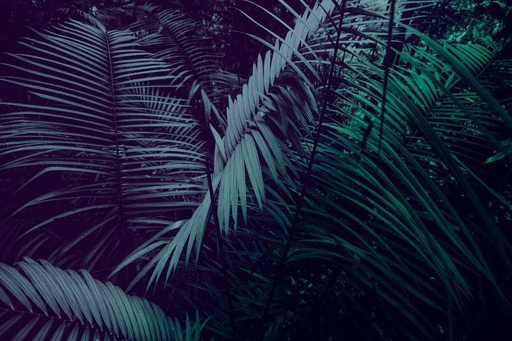 """43 tykkäystä, 2 kommenttia - Kai Kuusisto Photography (@kaikuusistophotography) Instagramissa: """"Jungle Boogie / Cairns Australia 2017. #jungle #darkness #tropicalleaves"""""""