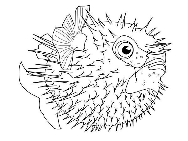 Sea Creature Printables fugu Fish Coloring Pages Of Sea