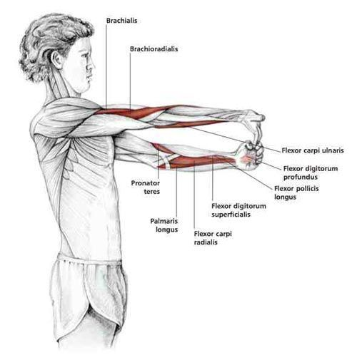 Fingers Down Forearm Stretch - Common Shoulder Stretching Exercises | FrozenShoulder.com