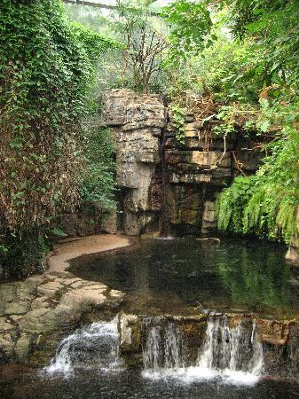 Okapi - Congo Gorilla Forest - Picture of Bronx Zoo, Bronx ...