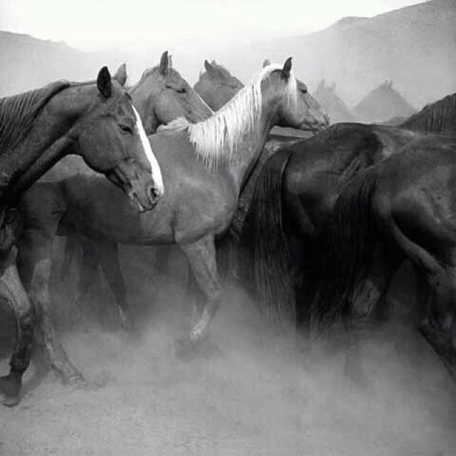Ranch horses wow een hele groep paarden