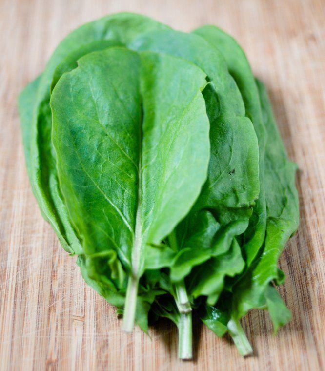 C'est le début de la saison de l'oseille (Rumex acetosa), communément cultivée dans les potagers. C'est une plante vivace assez …