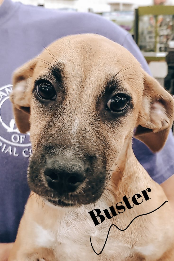 Buster is available for adoption at Humane Society of