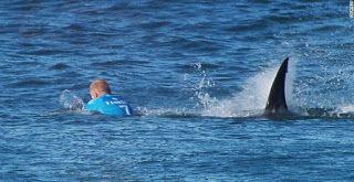 Ρεκόρ επιθέσεων από καρχαρίες σε ανθρώπους το 2015