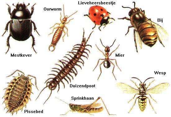 Zoekkaart Kriebelbeestjes