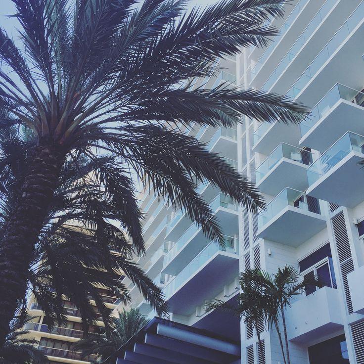 Pretty Palmtree