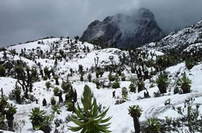 """12 Day Rwenzori Trek with Safari  The Rwenzoris, or the """"Mountains of the Moon"""", have a celebrated beauty. Shrouded almost perpetually in mist, they have a seducing, eerie quality that led to many wondrous tales about them through the ages.Rwenzori is known primarily for its challenging hiking and climbing possibility with a unique among East African Mountains. Rwenzori is not Volcanic in Origin, but it rises directly from the Rift valley floor. Its range also supports a diver..."""