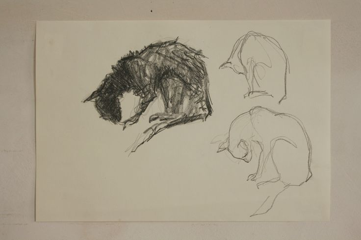 skizze Katze.