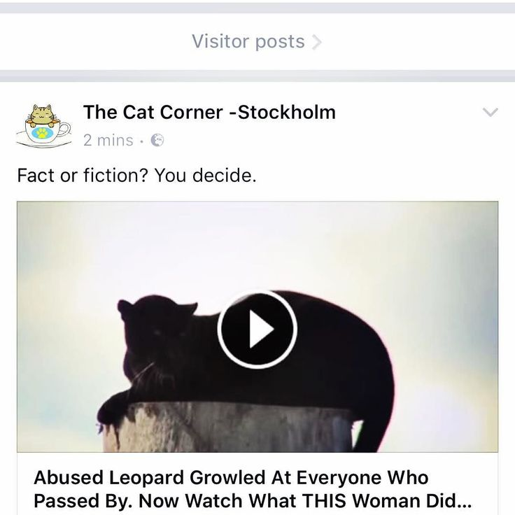 Do you talk to your cat ? Does your cat talk to you ? Watch this short film. http://ift.tt/2pA8HBK  #cat #katt #catsofinstagram #thecatcornerstockholm #love #neko #katten #blackcat #panthers #catstagram