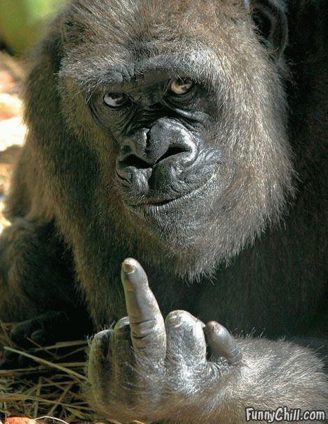 The Finger: Numbers One, Funny Pics, Funny Humor, Fingers, Funny Stuff, Signs Language, Funny Animal, Funnystuff, Animal Funny