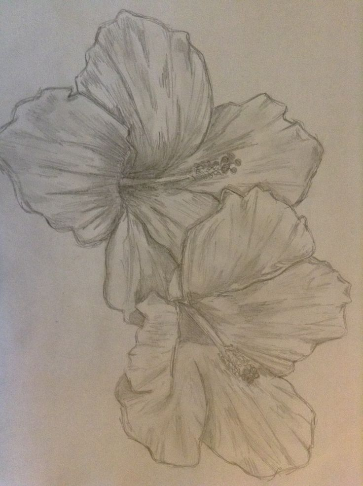 Hibiscus sketch...yes I'm aware it's sideways