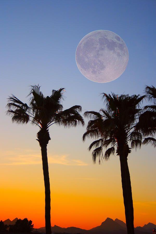 ✮ Spectacular Palm Tree Full Moon Sunset: Moonnight Sky, Trees Full, Beautiful Moon, Palms Trees, Full Moon, Moon Luna, Sunri Sunsets, Moon Sunsets, Diamonds Moon