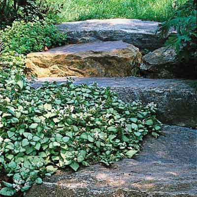 To help rustic stonework blend even better into its natural surroundings—and take the edge off its solid mass—surround it with small-leaved groundcovers such as creeping thyme or this spotted deadnettle. Photo: Tom McWilliam. thisoldhouse.com