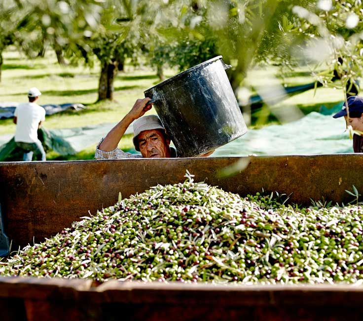 25 Best Our Company Images On Pinterest Olive Oil Olive Oils And Balsamic Vinegar