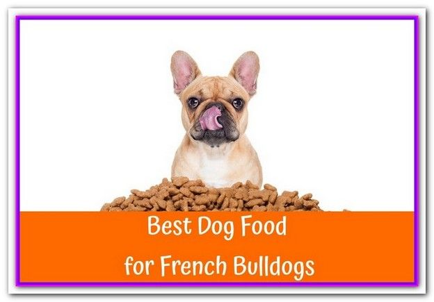 Best Dog Food For French Bulldogs With Gas Best Dog Foods For