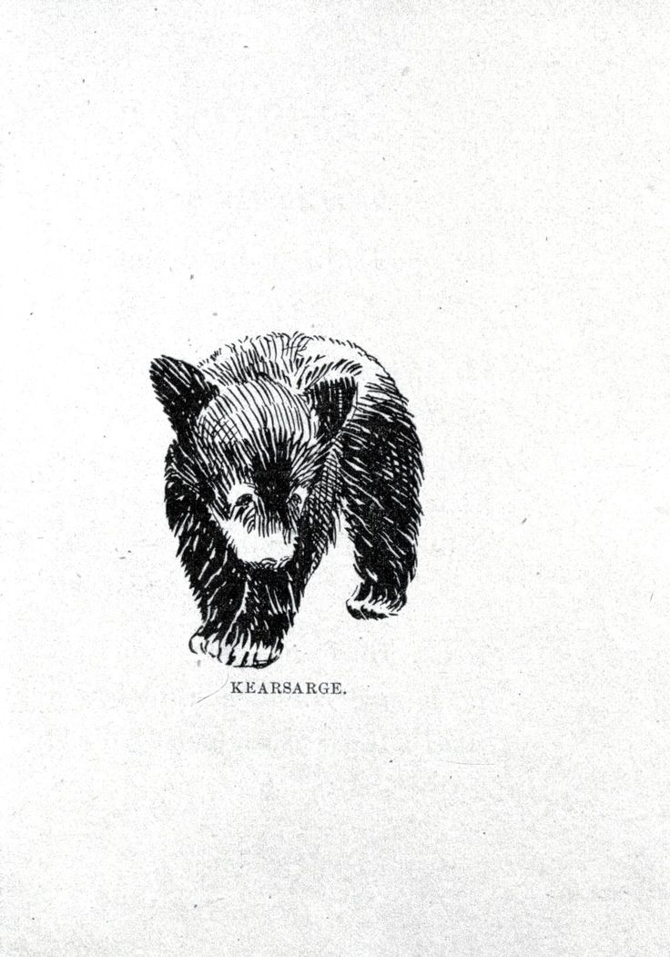 Animal - Bear - Baby bear drawing 5 I would want to change the position and a little of the fur but pretty close to what I want