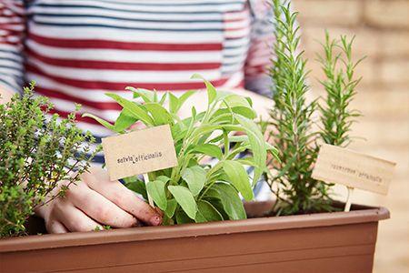 Rendete speciale il vostro balcone coltivando piantine aromatiche. Scopri tutti i nostri #consigli: http://www.dimmidisi.it/it/dimmidipiu/idee_in_pochi_minuti/article/il_balcone_dei_sapori.htm #dimmidisi #tutorial #diy #faidate #polliceverde #plants #piante