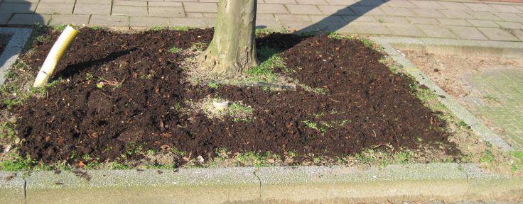 De compost is over de bodem van de boomspiegel verdeeld.