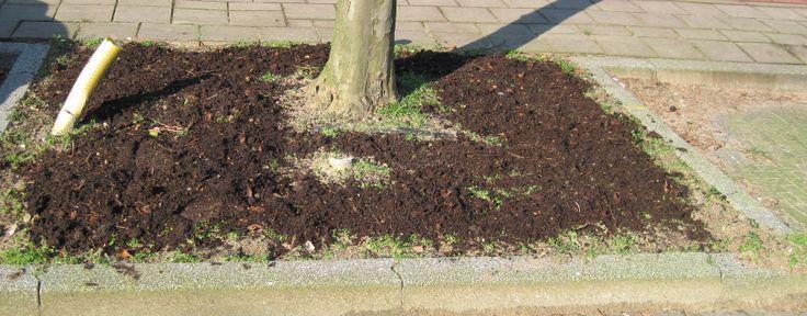 De compost is over de bodem van de boomspiegel verdeeld.