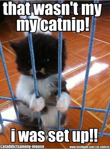 I'm not guilty...Dogs, Funny Animal Pics, Funny Cat, Hard Time, Humor, Prison Breaking, Kittens, Funny Animal Photos, Kitty