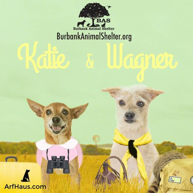 At tomorrow's #TourForLife2015 event with @burbankanimalshelter, you can meet bonded pair Katie and Wagner! Katie is an 8-year old red-coated female Chihuahua and in platonic-love with Wagner, a 7-year old wiry-haired cream Border Terrier mix. They both share a deep bond, a sweet demeanor and are in need of patient owners. We will be at Burbank Farmer's Market from 8:30am - 12:3pm!