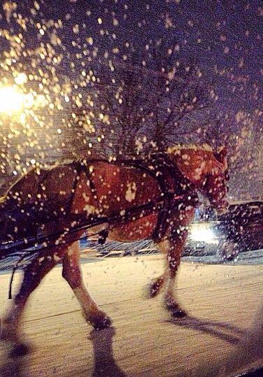 Cheval marchant dans les rues de Montréal