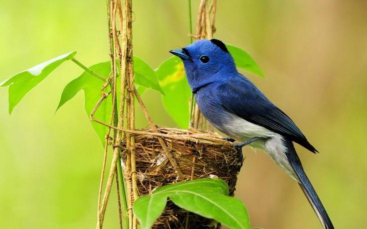 New Image result for birds wallpaper 6