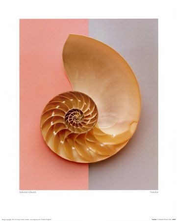 Fibonacci patterns in Chambered Nautilus, pine cones, pineapple, sunflowers, etc. Always an interesting PATTERN for Art (with Math link)!