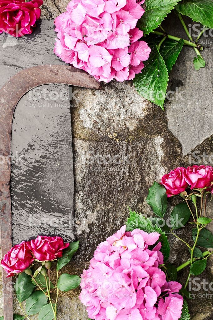 gardening set with flowers and vintage tools foto stock royalty-free