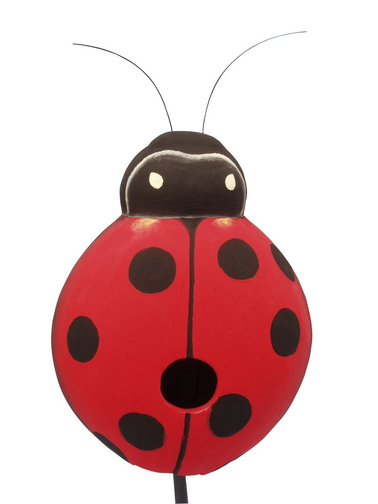 the ancient tradition of the ladybug Example sentences with the word tradition tradition example sentences definitions synonyms tradition sentence examples it's a tradition around here our family has a long tradition of self-sacrifice and charity maybe we but the ancient tradition for a long time lost its.