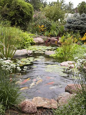 Love my pond, love my koi, (they're really big goldfish that started out as feeder fish some 15-20 years ago), but I'd really like them up close and personal, maybe in a smaller pond.
