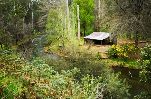 Pickerings Hut, Victoria, was built in 1953 for recreational and fishing purposes. Deciduous exotic trees shade the grounds.