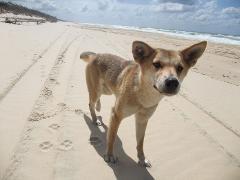 3Day/2N 4WD Beach Camping Safari dep & returning to Hervey Bay