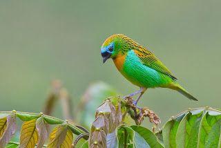 15 fotos de aves exóticas del paraíso by Bertrando Campos | Banco de Imagenes