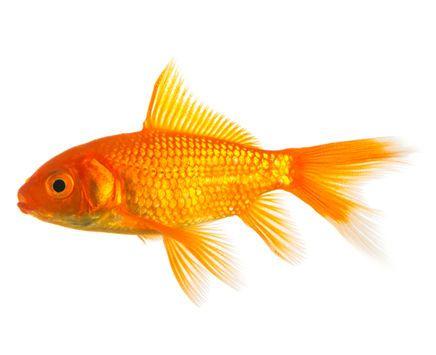 1000 bilder zu aquarium auf pinterest neon fische und for Zierfisch teich