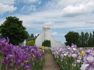 Iris Farm about 5 miles west of Traverse City (and 10 miles east of our cottage in Empire, Michigan)...beautiful!
