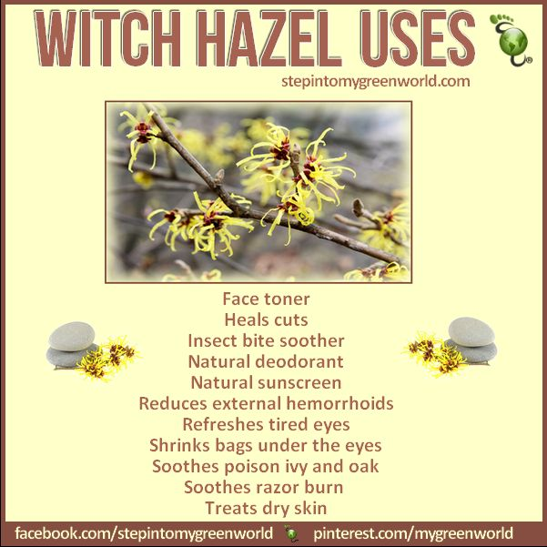 Do you use witch hazel? It has many medicinal benefits