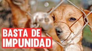 Resultado de imagen para proteccion animal